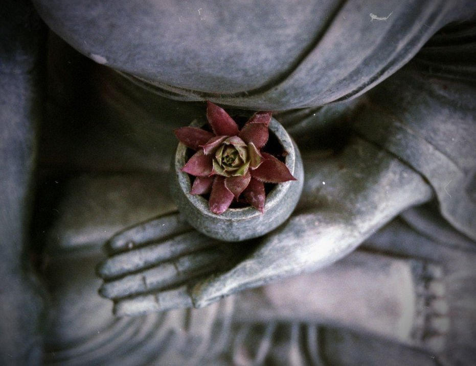 Buddha Statue - close up of hand with a purple flower