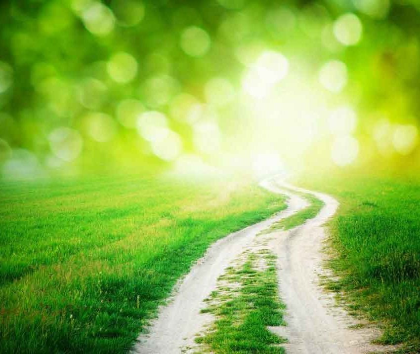 Path in a brightly lit green field