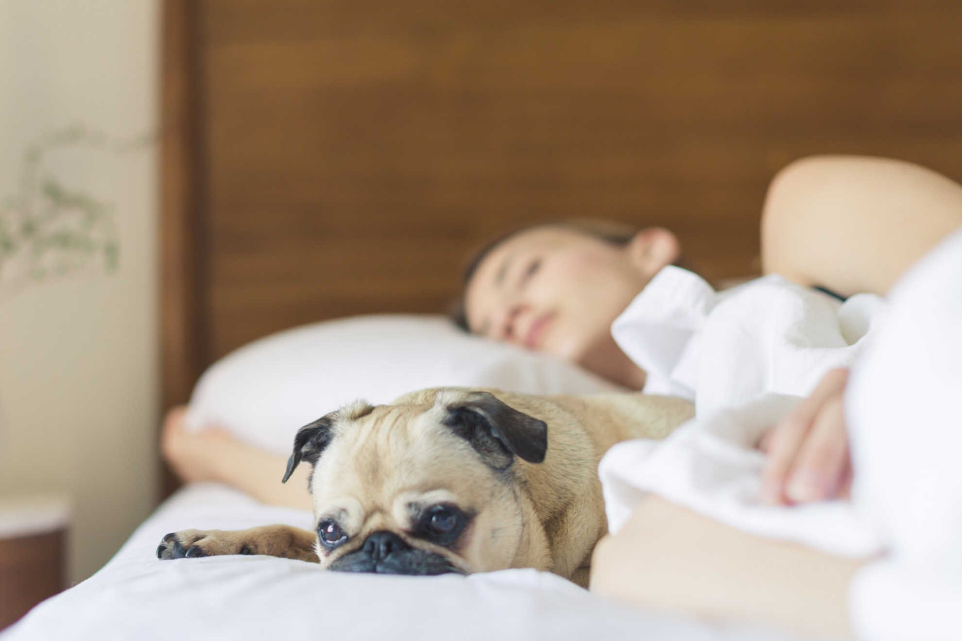 Woman in bed, sleeping and relaxing with a cute pug dog - ways to overcome stress